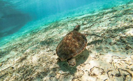 Snorkelen in Kroatië: 5x de mooiste plekken!